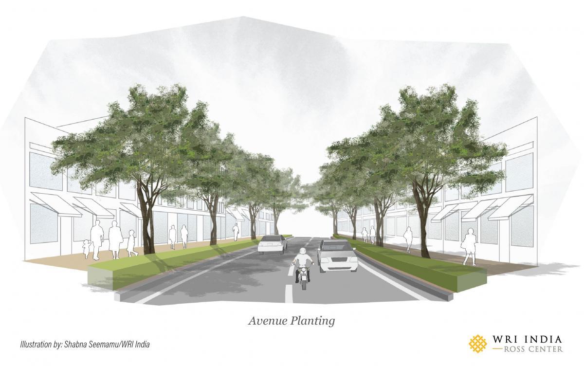 Avenue planting