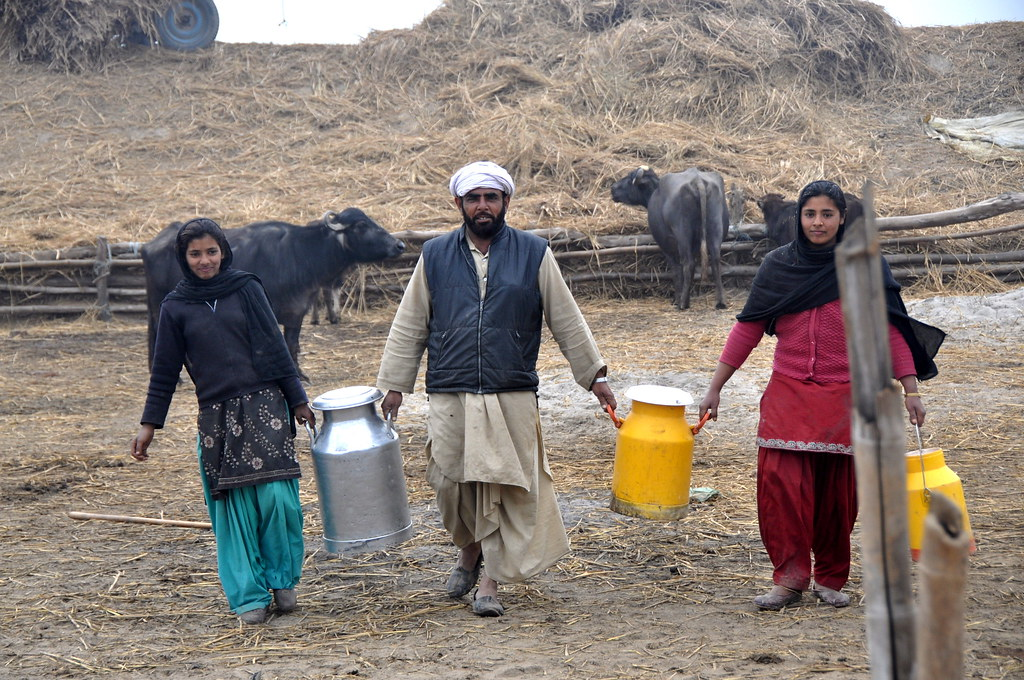 A dairy farming family carrying their cows' milk in Punjab, India. Photo by P. Casier/CGIAR.