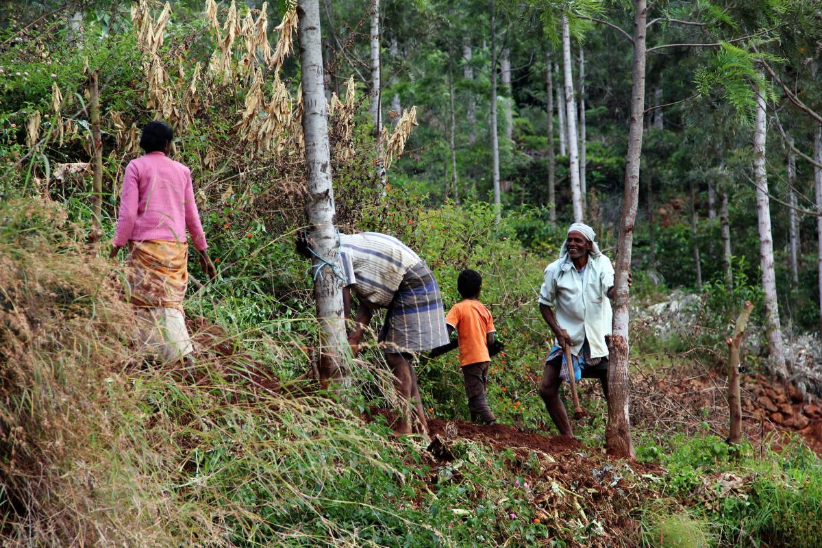 Many rural communities in India practice agroforestry. Photo by James Anderson/WRI