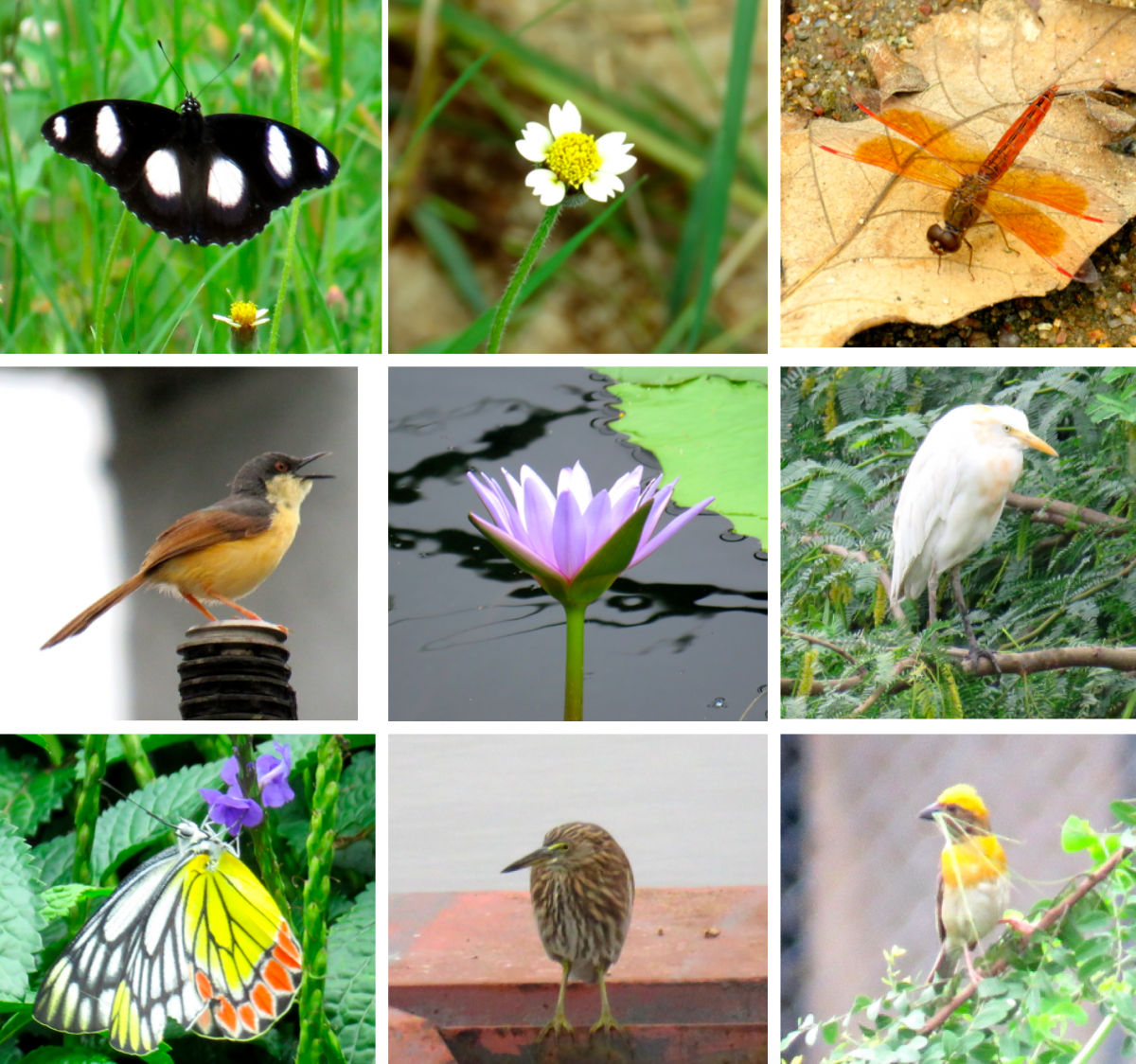 Some of the biodiversity found in and around of an urban waterbody, Hyderabad Credit: WRI India