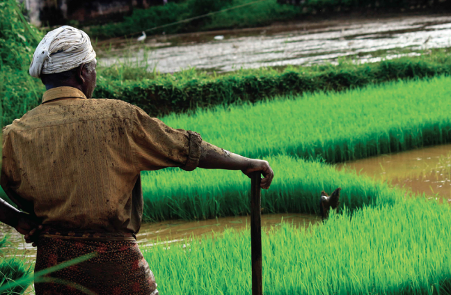 Financing Agricultural Resilience