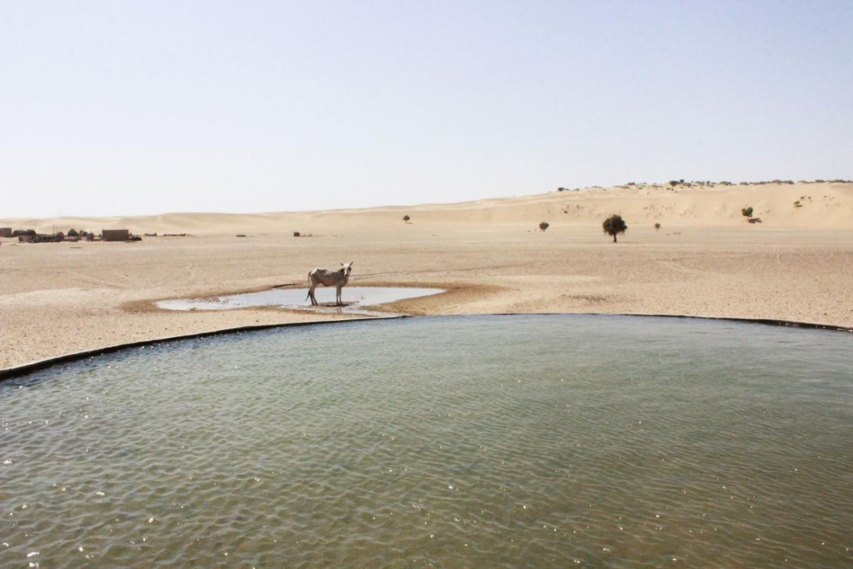 Human-made oasis: water troughs for livestock